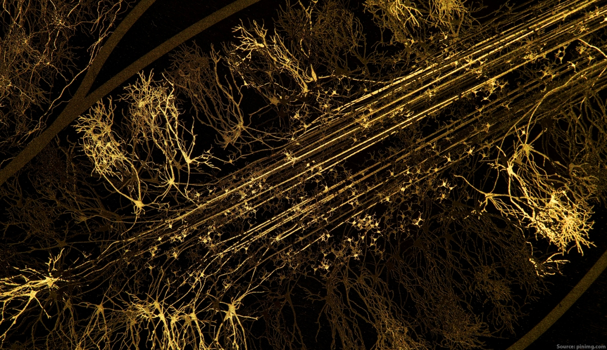The Golden Dance of Neurons